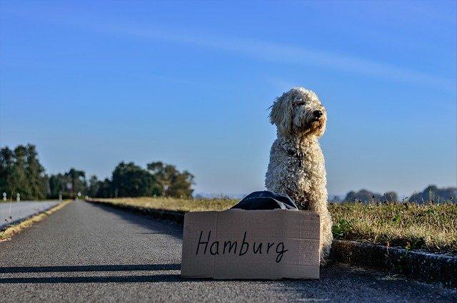 Transporter dla psa – W czym bezpiecznie transportować pupila?