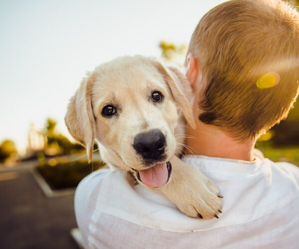Zabawa na dworze z psem – o czym pamiętać?