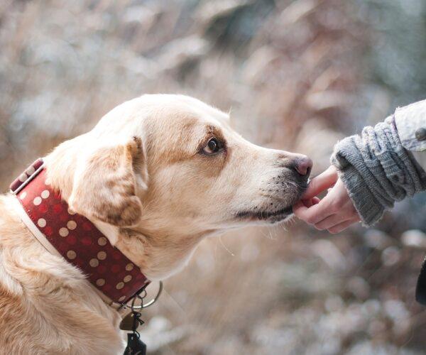 Naturalne gryzaki dla psa – jakie mają zalety?